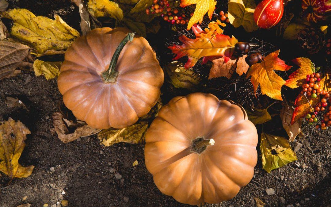 31 ottobre – Un po' di sale in zucca?